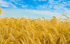 Оскол Агро - производитель и поставщик современного оборудования для сельского хозяйства.